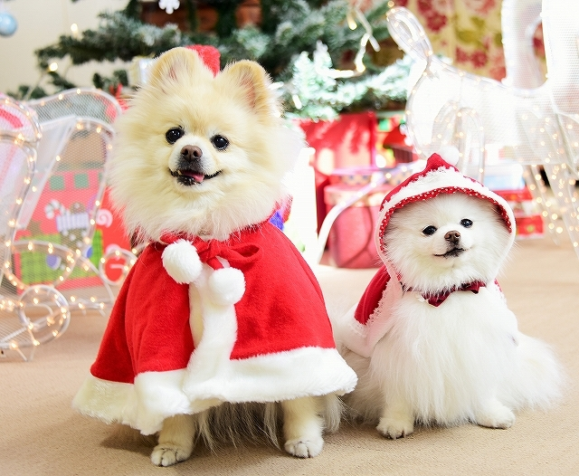 クリスマスは一緒に_d0360206_00111311.jpg