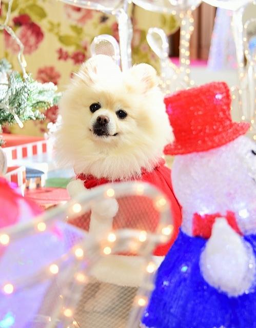 クリスマスは一緒に_d0360206_00112115.jpg