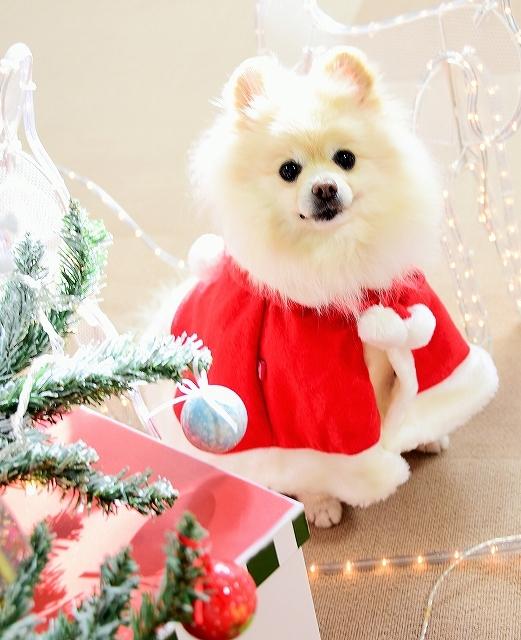 クリスマスは一緒に_d0360206_00112542.jpg
