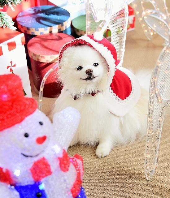 クリスマスは一緒に_d0360206_00112976.jpg
