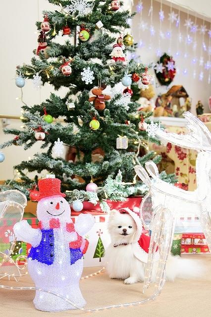クリスマスは一緒に_d0360206_00113375.jpg