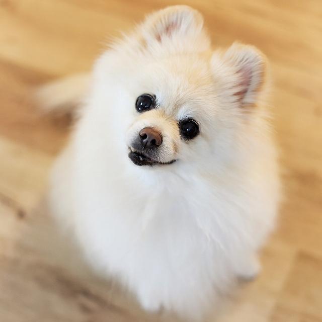 これは犬ブログです_d0360206_00460237.jpg