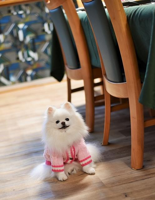 これは犬ブログです_d0360206_00462811.jpg