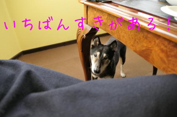 鶏焼き会_f0369014_09593946.jpg