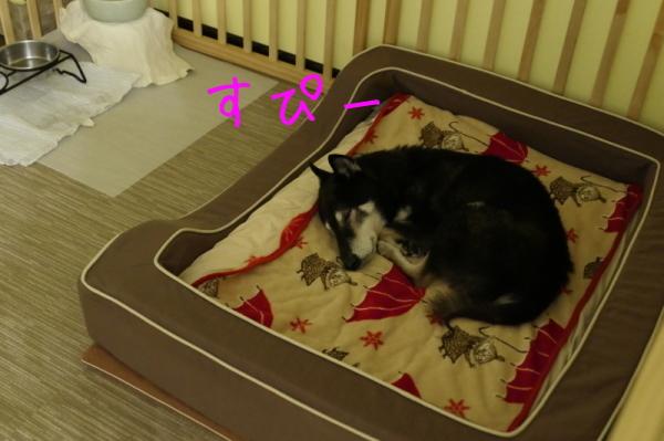 鶏焼き会_f0369014_10090211.jpg