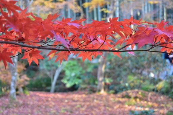 京都パンパン赤線時代 五十五_f0347663_12245192.jpg