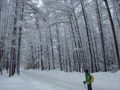 スノーシュートレッキングで雪の風景にどっぷり浸ろう!_a0096989_18034867.jpg
