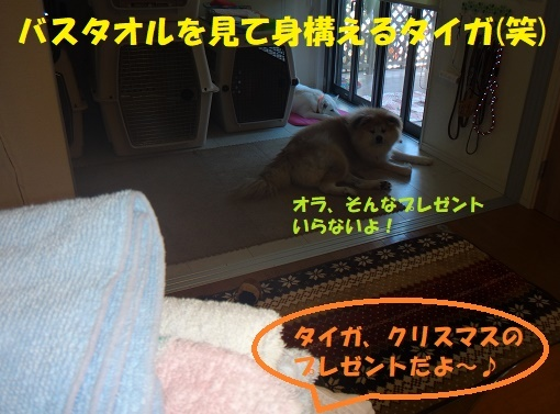 f0121712_20375872.jpg