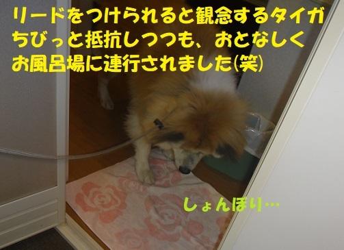 f0121712_20565193.jpg