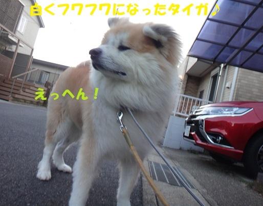 f0121712_23550875.jpg