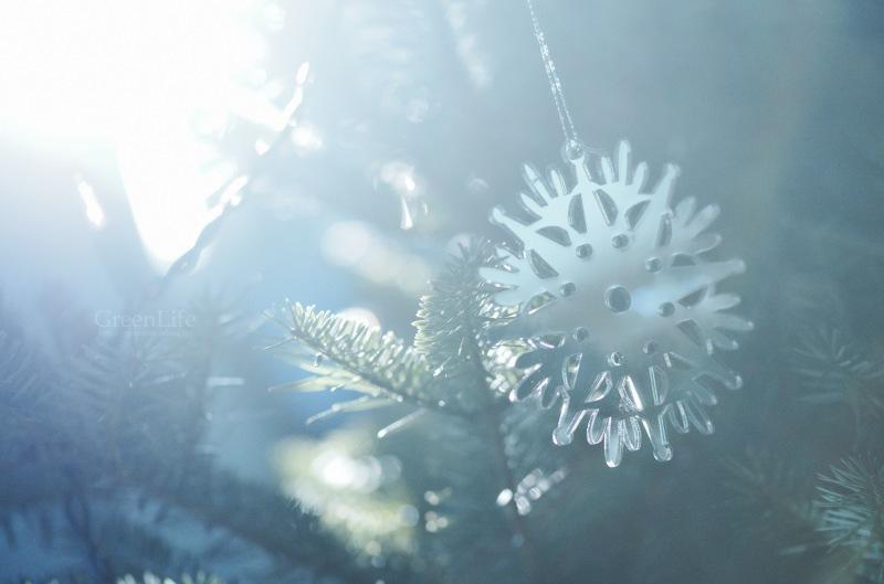 クリスマスの朝_f0321522_14531409.jpg