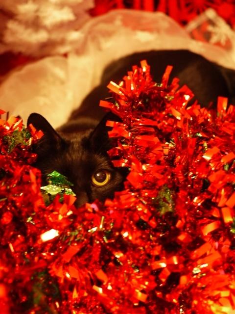 クリスマス猫 てぃぁら編。_a0143140_23532336.jpg