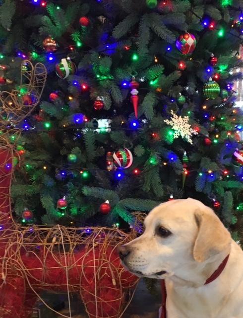 merry christmas   クーちゃん&サージュ_a0165160_16542360.jpg