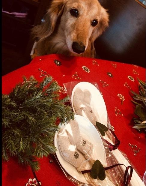 merry christmas   クーちゃん&サージュ_a0165160_17005749.jpg