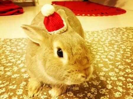 クリスマスイブ♪♪♪_f0201565_19343874.jpg