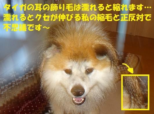 f0121712_07410718.jpg