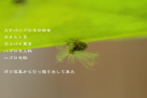 d0042827_09143684.jpg