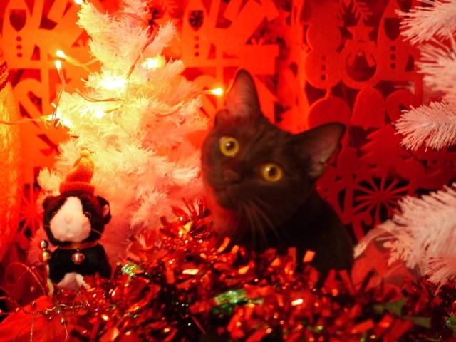 クリスマス空サンタクロースと一緒猫 あんしゃぁりぃ編。_a0143140_00004982.jpg