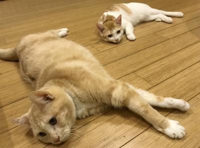 猫と暮らす 1_a0210340_18023565.jpg