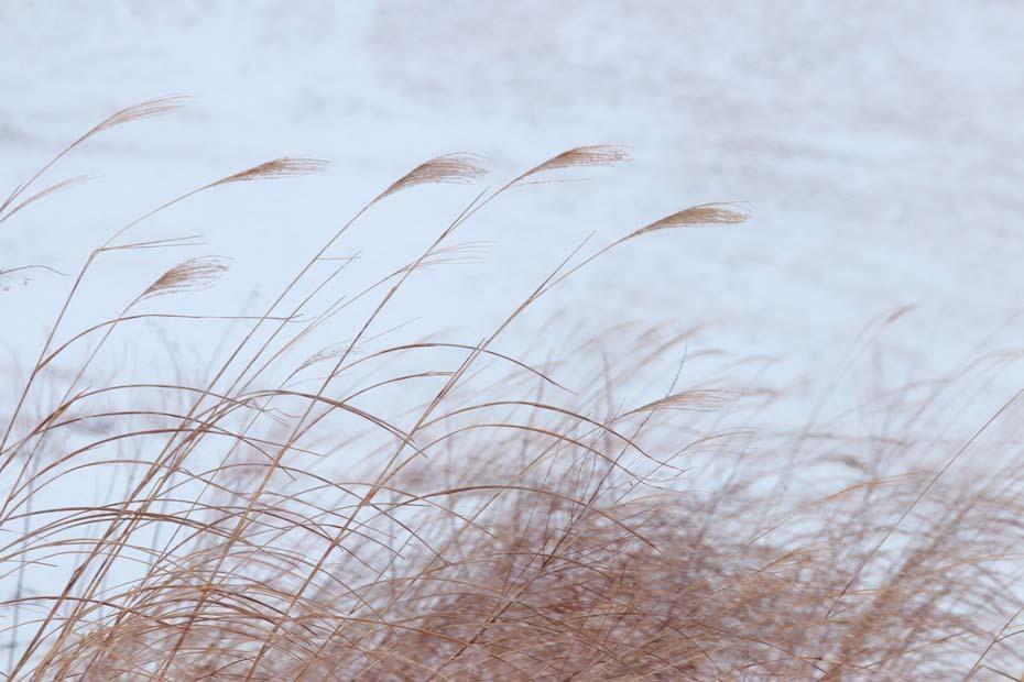 雨から雪へ_c0067040_20412670.jpg