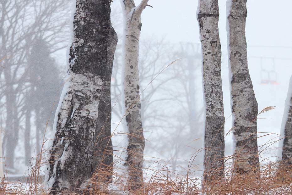 雨から雪へ_c0067040_20414802.jpg