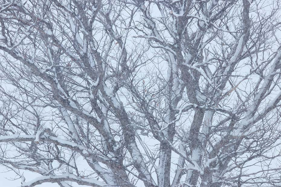 雨から雪へ_c0067040_20420386.jpg