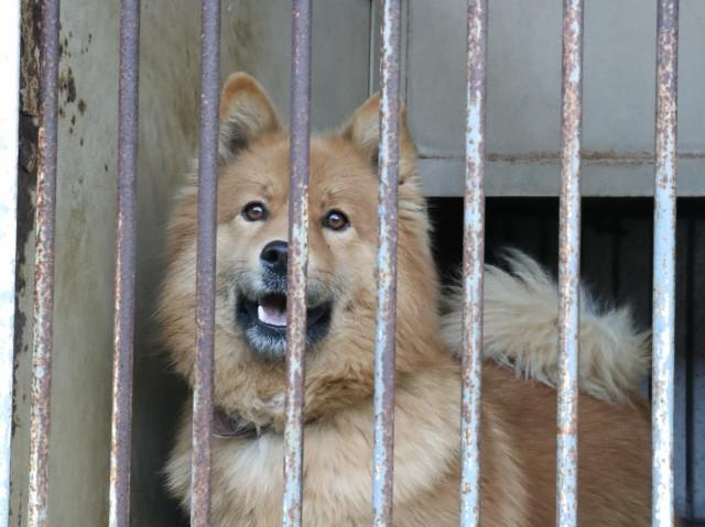 神奈川県動物保護センター_b0287468_01363522.jpg