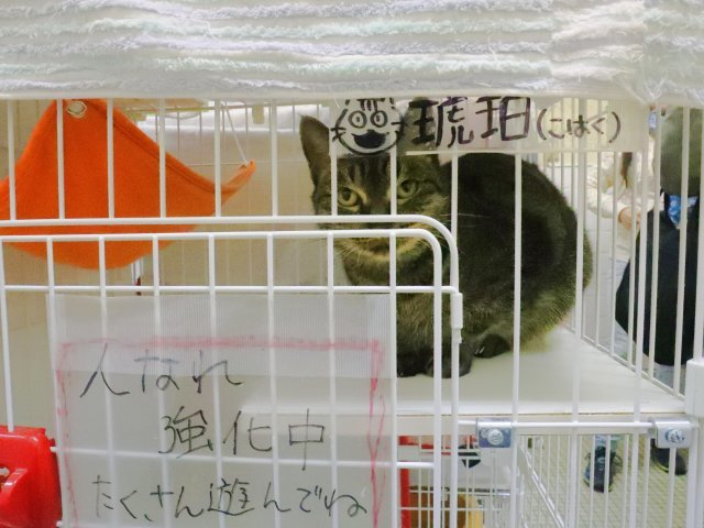 神奈川県動物保護センター_b0287468_01365632.jpg