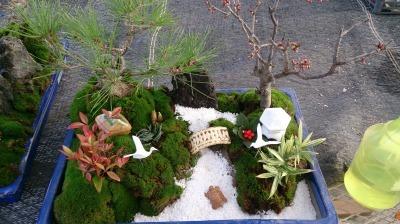 温室通信 正月用盆栽を制作しました!_d0338682_13542472.jpg