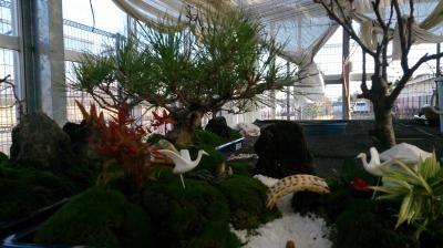 温室通信 正月用盆栽を制作しました!_d0338682_13544113.jpg