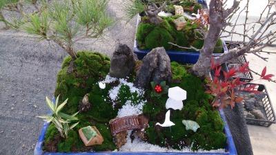 温室通信 正月用盆栽を制作しました!_d0338682_13550347.jpg