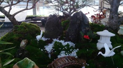 温室通信 正月用盆栽を制作しました!_d0338682_13551230.jpg