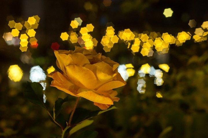 星がまたたく都市公園_d0353489_2044647.jpg