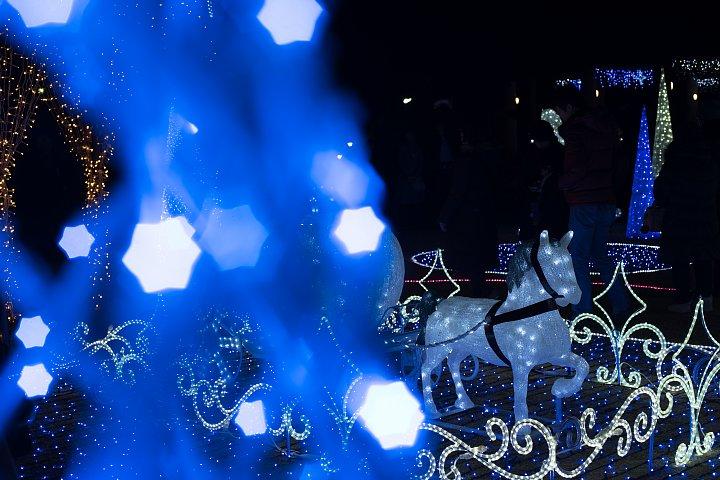 星がまたたく都市公園_d0353489_2065248.jpg