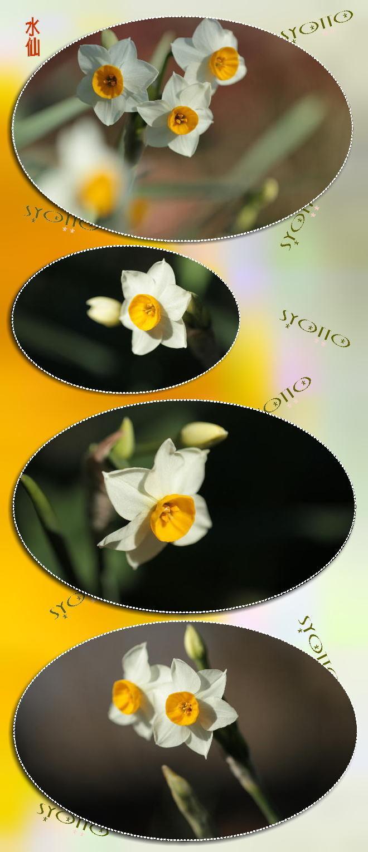 f0164592_20390489.jpg