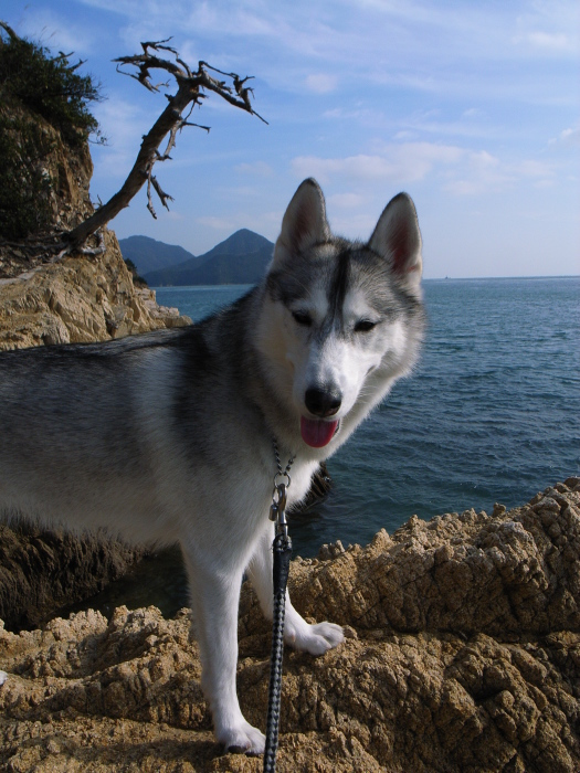 First Pilgrimage for Siberian Husky Hana II  Dec.22nd, 23rd, 24th, 25th, 26th, and 27th 2006_c0049299_19385377.jpg