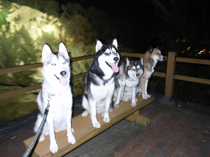 First Pilgrimage for Siberian Husky Hana II  Dec.22nd, 23rd, 24th, 25th, 26th, and 27th 2006_c0049299_19434283.jpg