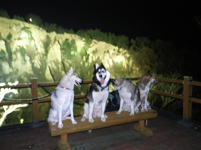 First Pilgrimage for Siberian Husky Hana II  Dec.22nd, 23rd, 24th, 25th, 26th, and 27th 2006_c0049299_19450599.jpg