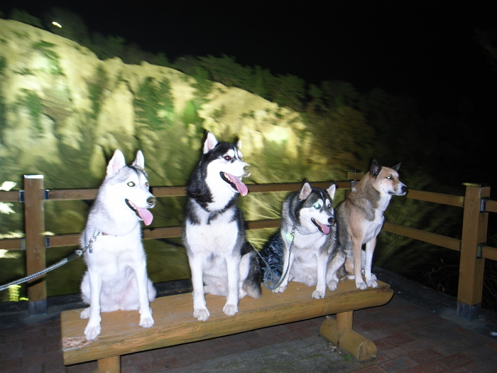 First Pilgrimage for Siberian Husky Hana II  Dec.22nd, 23rd, 24th, 25th, 26th, and 27th 2006_c0049299_19454961.jpg