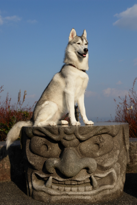 First Pilgrimage for Siberian Husky Hana II  Dec.22nd, 23rd, 24th, 25th, 26th, and 27th 2006_c0049299_21375940.jpg
