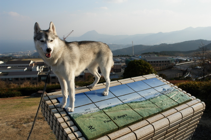 First Pilgrimage for Siberian Husky Hana II  Dec.22nd, 23rd, 24th, 25th, 26th, and 27th 2006_c0049299_21381752.jpg