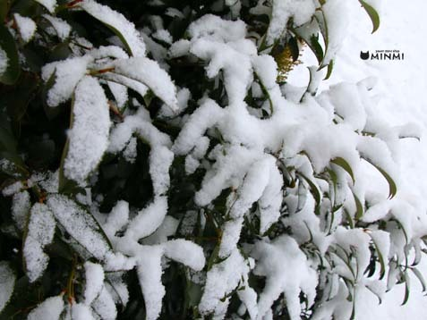雪がもっさり降っています(≧▽≦)_c0140599_11572725.jpg