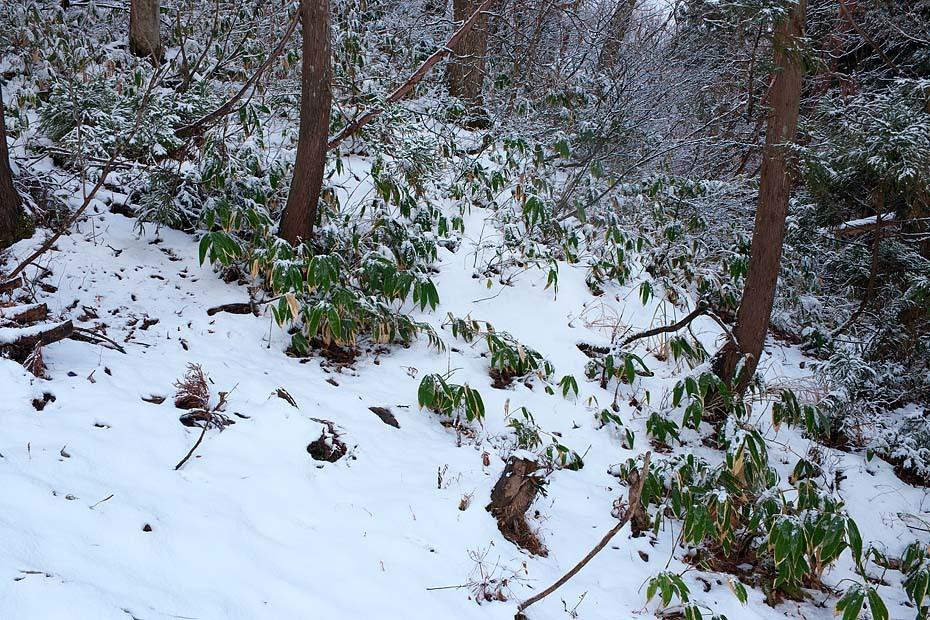 雪のある風景_c0067040_21501599.jpg