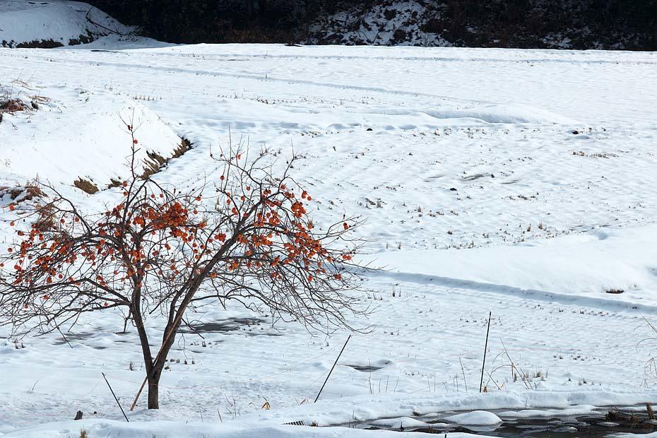 雪のある風景_c0067040_21510679.jpg