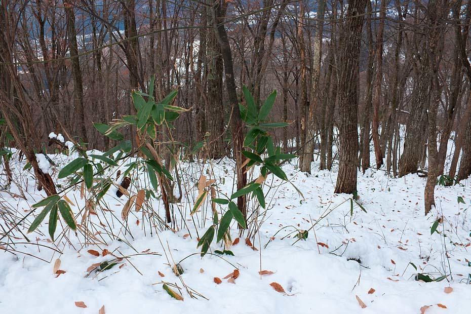 雪のある風景_c0067040_21512024.jpg