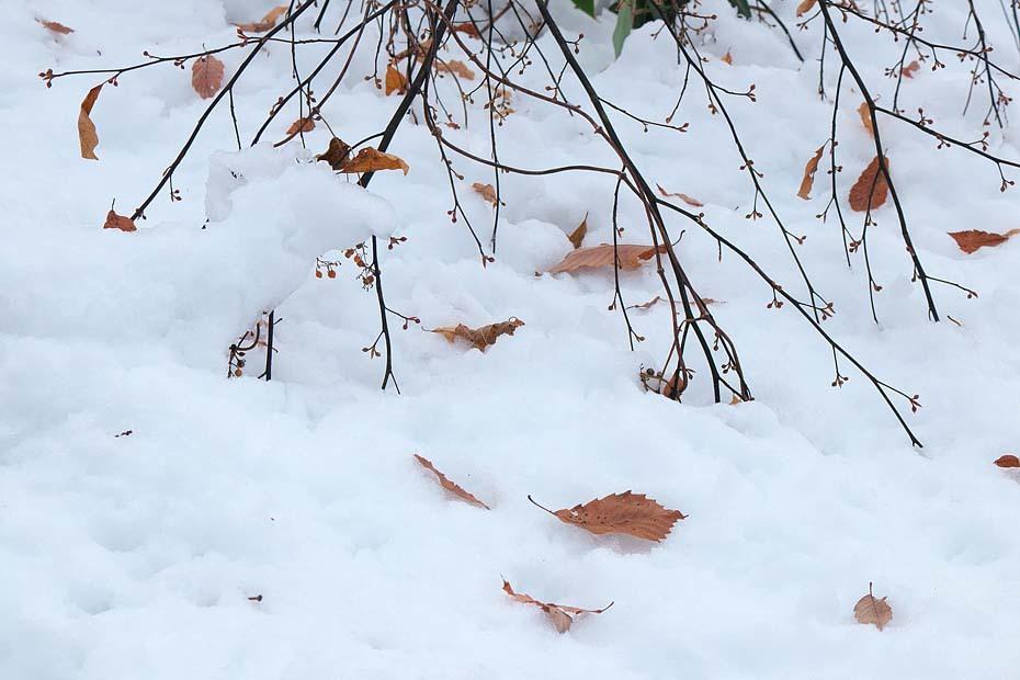 雪のある風景_c0067040_21514121.jpg