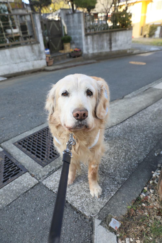 歩かないと思ったら、歩きました。_b0275998_10551940.jpg