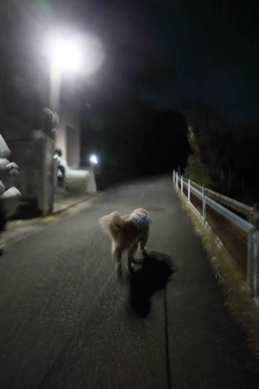 歩かないと思ったら、歩きました。_b0275998_10561408.jpg