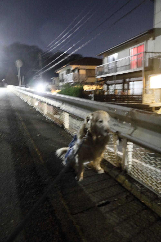 歩かないと思ったら、歩きました。_b0275998_10562772.jpg