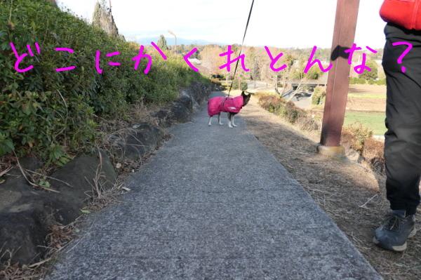 f0369014_12161176.jpg